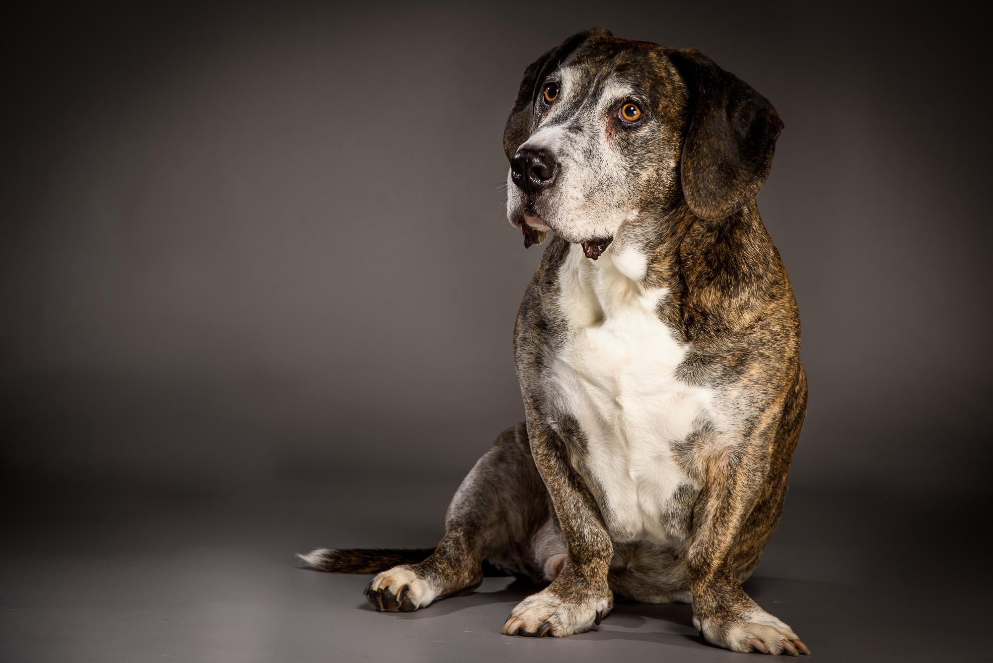 Dog Photography-15